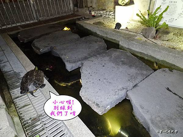 中庭鳥龜 (2)0.jpg