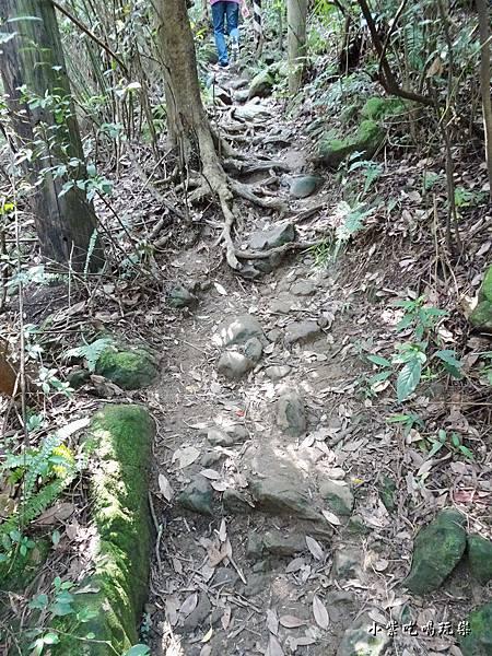 往鳶山頂捷徑步道 (3).jpg