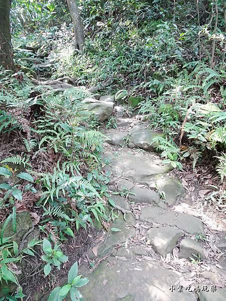 往鳶山頂捷徑步道 (4).jpg