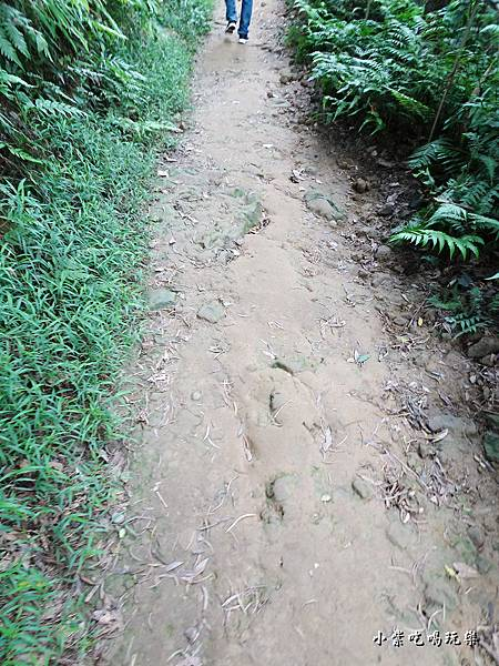 鳶山步道4.jpg