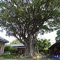 生命之樹 (2).jpg