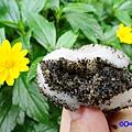 芝麻口味-麻糬大王程文照5.jpg