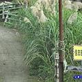 佳志部落8鄰 (1).jpg