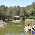 阿里山森林遊樂區-櫻花季10.jpg
