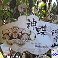 阿里山森林遊樂區-櫻花季11.jpg