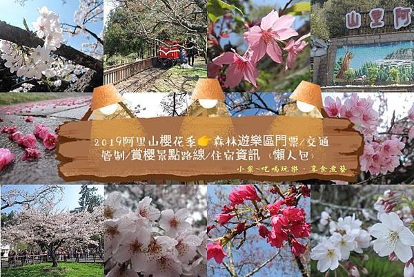 阿里山櫻花季首圖.jpg