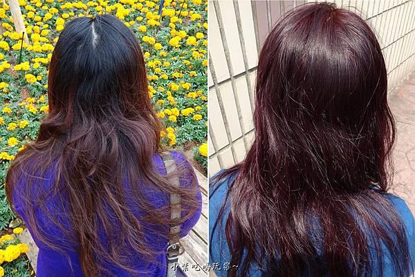 染髮前後髮根顏色-尚洋髮藝成都店.jpg