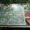 棗莊-生鮮紅棗   (4).JPG