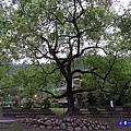 谷關溫泉公園 (2).jpg