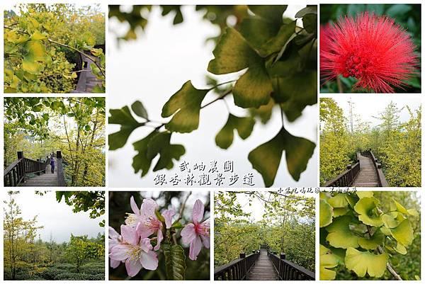 武岫農圃-銀杏林觀景步道拼圖.jpg
