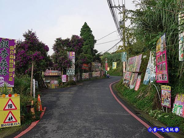 2019銀杏森林1.jpg
