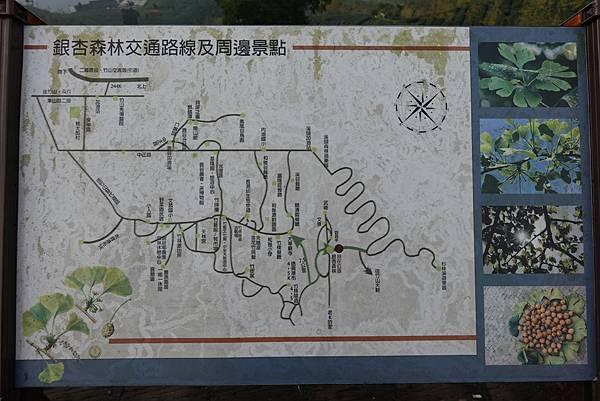 2019-918銀杏森林 (3).JPG