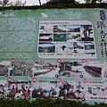 2019-918銀杏森林 (1).JPG