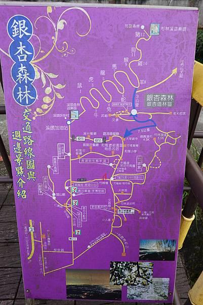 2019-918銀杏森林 (4).JPG