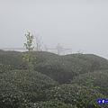 大崙山瞭望平台2.jpg