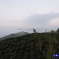 大崙山瞭望平台20.jpg