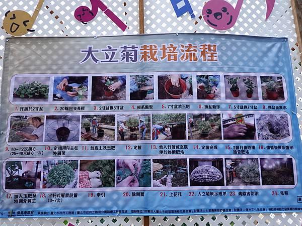 大立菊栽培流程.JPG