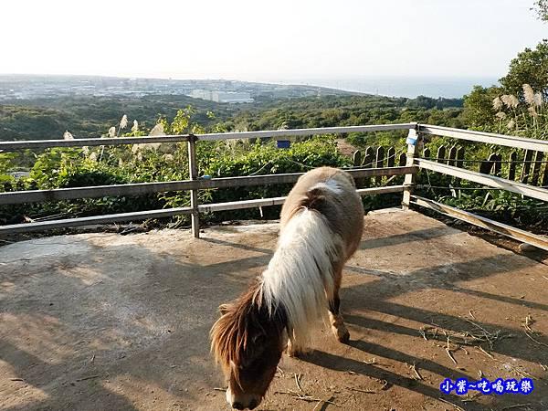 迷你馬-海灣星空景觀咖啡館 (1).jpg