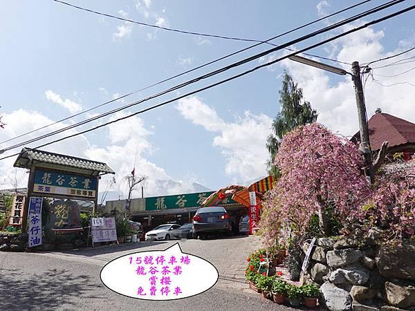 P15龍谷茶葉免費停車-草坪頭櫻花季.jpg