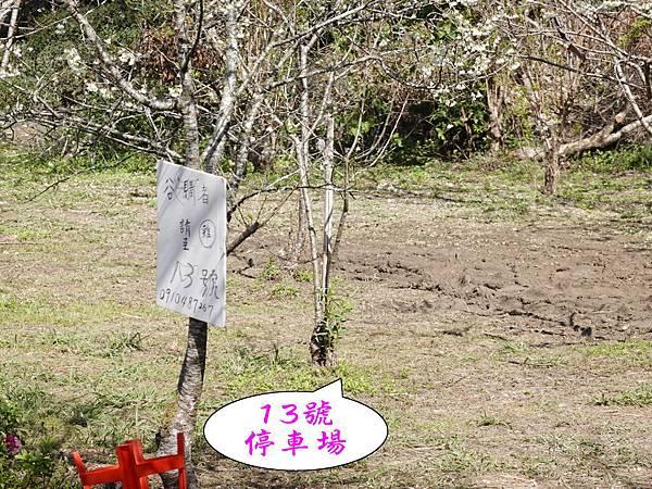 P13有賣土雞-草坪頭櫻花季 (1).jpg