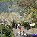 明生花步道、觀景步道景觀 (1).jpg