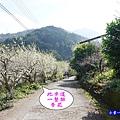 明生花步道、觀景步道景觀 (10).jpg