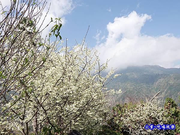 明生花步道、觀景步道景觀 (14).jpg