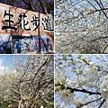 明生花步道、觀景步道景觀 (17).jpg