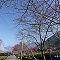 靠近第3停車場櫻花大道.jpg