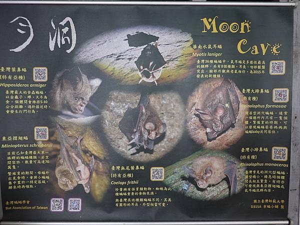 花蓮月洞遊憩區門票注意事項 (10).JPG