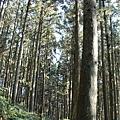 山上人家森林步道20.jpg