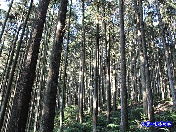 山上人家森林步道22.jpg