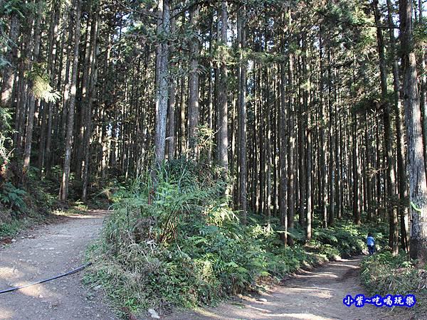 山上人家森林步道24.jpg