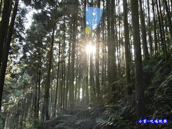 山上人家森林步道25.jpg