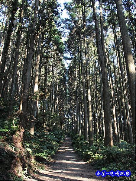 山上人家森林步道21.jpg