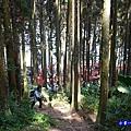 森林咖啡館內-森林登山步道2.jpg