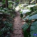 森林咖啡館內-森林登山步道3.jpg