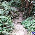 森林咖啡館內-森林登山步道5.jpg