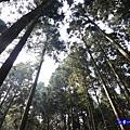 森林咖啡館內-森林登山步道4.jpg