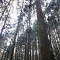 森林咖啡館內-森林登山步道11.jpg