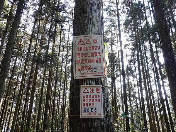 森林步道叉路多.jpg