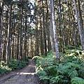 森林咖啡館內-森林登山步道12.jpg