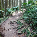森林咖啡館內-森林登山步道13.jpg