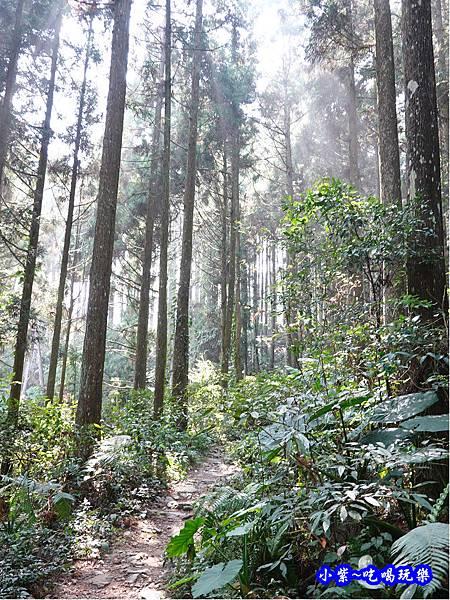 森林咖啡館內-森林登山步道14.jpg