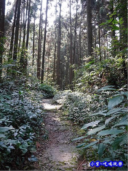 森林咖啡館內-森林登山步道16.jpg