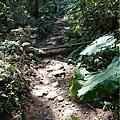 森林咖啡館內-森林登山步道15.jpg