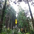 森林咖啡館內-森林登山步道18.jpg