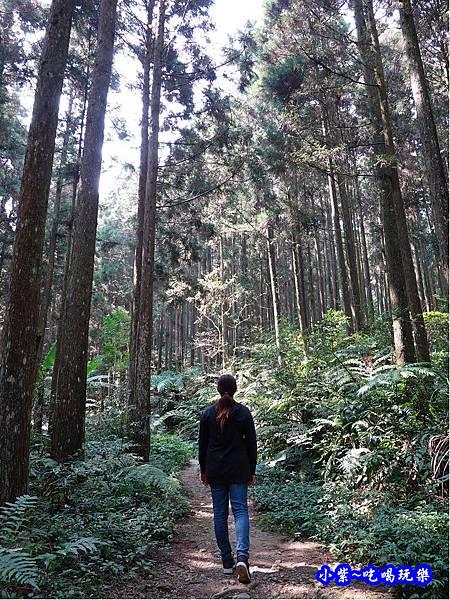 森林咖啡館內-森林登山步道17.jpg