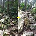 森林咖啡館森林步道.jpg