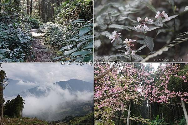 森林咖啡館森林登山步道首圖.jpg